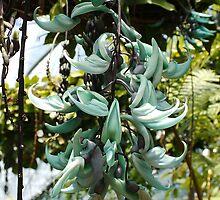Rare Jade vine( Strongylodon macrobotrys)  by AnnDixon