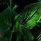 Hosta in the Dark by Sandra Lee Woods