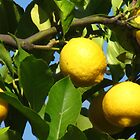 Luscious Lemons in the Light by Mary-Elizabeth Kadlub