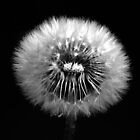 Dandelion Seed Head by designed2dazzle