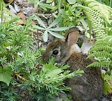 Runny Babbit! by Dahbee