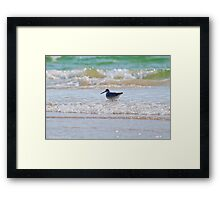 Splashing in the Sea Framed Print
