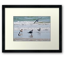 Preparing for Take-Off Framed Print