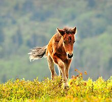 Little Sprinter  by Karen Peron