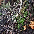 Warburton River Trail by gary A. trounson