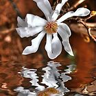 Magnolia Reflection by Elaine Teague