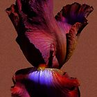 Bearded Iris'... by Valerie Anne Kelly