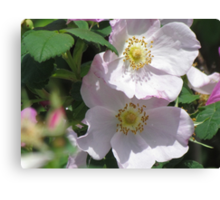 Wild Roses beauty Canvas Print