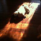 Distressed Dachshund by melanie1313