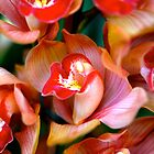 Orchids by naturesangle