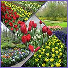 Tulips and Hyacinths - Keukenhof Collage by kathrynsgallery