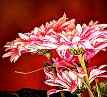 Pink Dasies  by George Lenz