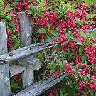 Fenced In Flowers by Sandra Fortier