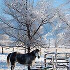 Winter Horse  by Nicole  Markmann Nelson