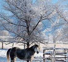 Winter Horse  by Nicole  Markmann Nelson