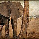 ALL IN AUTUM - WHEN IS SPRING? - THE AFRICAN ELEPHANT -Loxodonta Africana by Magaret Meintjes