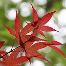 spring leaves by yvesrossetti