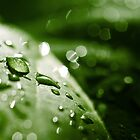leaf after the rain by JanaBehr