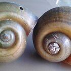 Shells by Veronica Jackson