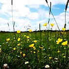 Buttercups and daisys by Llawphotography