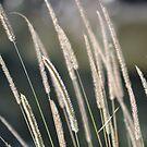 Grass by TheaShutterbug