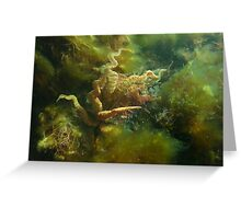 Giant Australian Cuttlefish (Sepia apama) is a master of disguise Greeting Card
