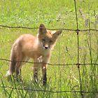 Fox by Leeanne Middleton