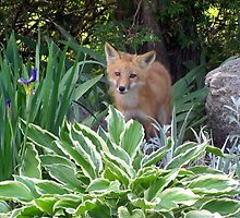Red Fox by Leeanne Middleton