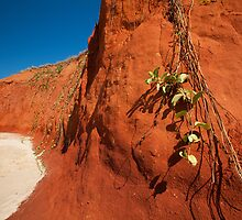The Red Cliffs by Mel Brackstone