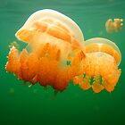 Jellyfish Love by Becqi Sherman