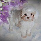 Puppy Love by JaninesWorld