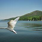 Swan Lake Windermere by brianhardy247