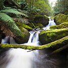 Tooronga Falls, Victoria by Gavin Poh