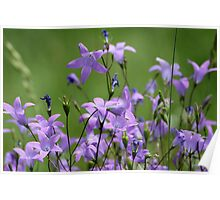 Bell Flowers Poster