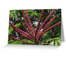 Jungle's Colours - Colores De La Selva Greeting Card