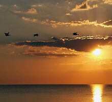 Gulf of Mexico by Barry Goble