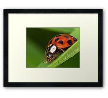 Ladybird - Ladybug - Marienkäfer - Glückskäfer Framed Print