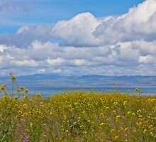 Mustard, Ocean and Clouds by John Butler