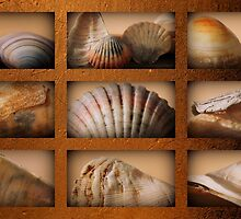 SHELL COLLAGE by myraj