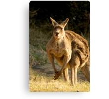 Goofy Kangaroo with it's tongue out Canvas Print