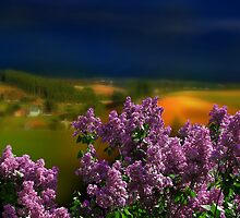 Lilac Time by Igor Zenin