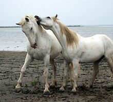 White Horses 2 by Charlotte Jarvis