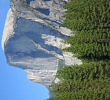 Half Dome- Yosemite by EarthPhoenix