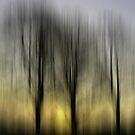 Three Trees in Motion - yellow by KUJO-Photo