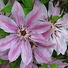 Clematis Colored by Monnie Ryan