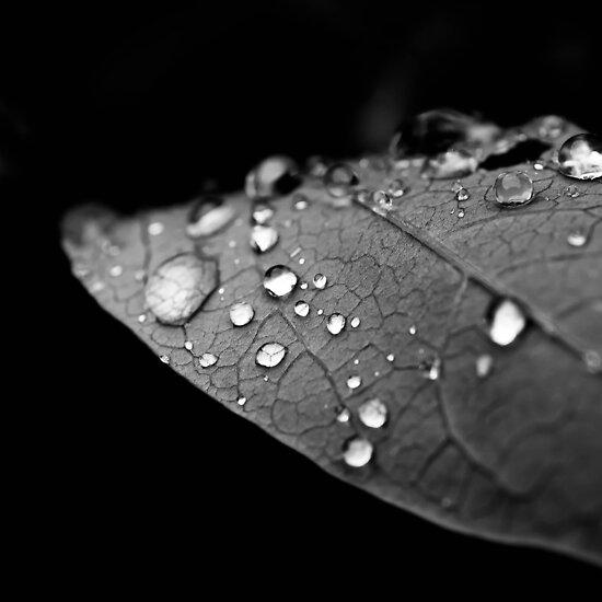 Water drop on leaf V by Matthew Bonnington