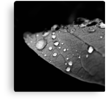 Water drop on leaf V Canvas Print
