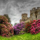 Warwick Rhododendrons by Mark Johnson