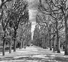 Jardin Des Plantes Gardens, Paris by Ali Brown