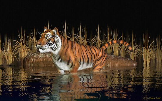Bengal Tiger by Walter Colvin